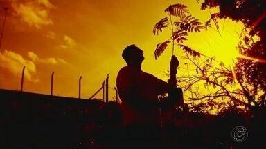Auxiliar de enfermagem inspira moradores ao plantar árvores em Rio Preto - Um auxiliar de enfermagem está plantando árvores para deixar a cidade de São José do Rio Preto (SP) ainda mais bela. A atitude dele tem inspirado alguns moradores.