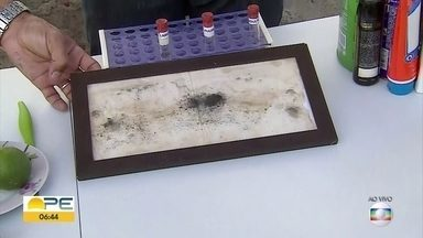 Veja como prevenir a proliferação do mosquito da dengue, zika e chikungunya - Além de produtos químicos, há cuidados essenciais para evitar problemas
