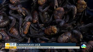 Período de defeso do caranguejo-uçá começa neste domingo - Até o dia 11, estão proibidos a captura, o transporte, o beneficiamento, a industrialização e a comercialização.