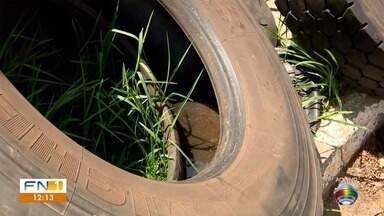 Acúmulo de água em pneus gera risco de infestação do mosquito da dengue - Problema foi constatado em Dracena.