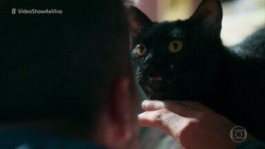 Confira a nova programação do 'Vídeo Show' - Veja o teaser do novo programa animal!