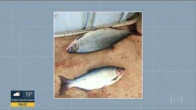 Peixes contaminados foram furtados da Unesp - Animais serviam para pesquisas da universidade em Ilha Solteira