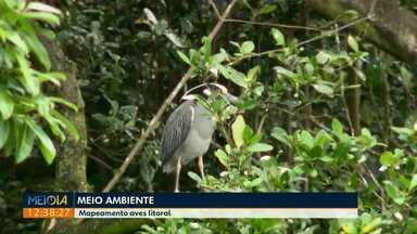 Aves que não eram mais vistas há tempos, começam a reaparecer em Antonina e Paranaguá - Equipe de biólogos tem feito o monitoramento do local e já identificou 132 espécies.