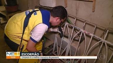 Número de picadas de escorpião aumenta 11% em 2018 em Pernambuco - Ao longo do ano, foram 16,8 mil notificações. Em 2017, foram 15,2 mil casos.