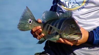 Ibama faz controle e fiscalização da pesca predatória no lago de Serra da Mesa - Guias capacitados fazem monitoramento do tucunaré azul na região no lago de Serra da Mesa.
