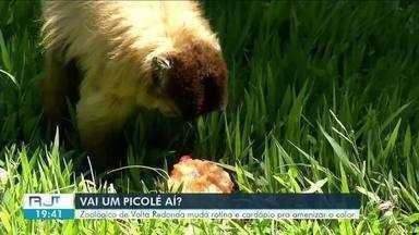 Calor: Zoológico de Volta Redonda muda rotina e cardápio dos animais, com frutas e picolés - Nos dias mais quentes, eles recebem uma alimentação especial!