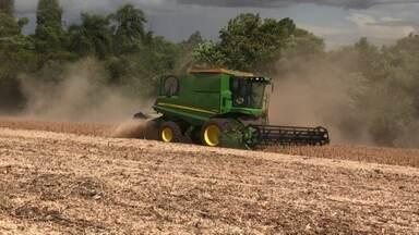 Falta de chuva faz com que produtores antecipem a colheita da soja - Confira o Caminhos do Campo do dia 13/01/2019