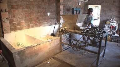 Veja como é o preparo da farinha de copioba em Cruz das Almas - A reportagem foi até o local mostrar o preparo.