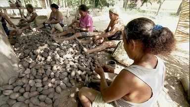 O universo do babaçu, uma palmeira nativa do Brasil - O babaçu brota fácil na natureza e garante o sustento de 350 mil quebradeiras de coco em quatro estados do país.