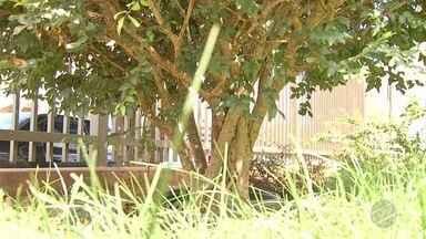 MS Rural esclarece dúvida da dona Maria José sobre a jabuticabeira - A planta dela não estava produzindo frutos.