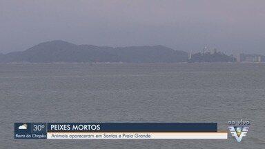 Peixes mortos aparecem nas praias de Santos e Praia Grande - Ibama apura se o motivo da morte dos animais tem relação com o vazamento de navio que ocorreu no porto de Santos, na quinta-feira (10).