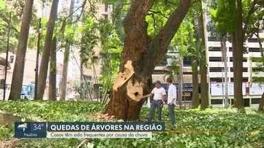 Quedas de árvores têm sido frequentes com as chuvas na região - Saiba o porquê de tantas ocorrências de quedas de árvores nessa época do ano e descubra como prevenir os riscos.