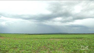 Agricultores e empresas temem perda na safra da soja no sul do Maranhão - Eles também reclamam do aumento no custo do plantio e no transporte da safra dos grãos.
