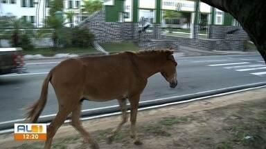 Cavalo solto em canteiro da Avenida Fernandes Lima preocupa motoristas - Caso ocorreu na manhã desta quinta-feira (31).