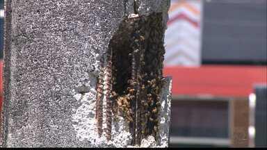 Mulher é atacada por abelhas na Praia de Tambaú, em João Pessoa - Ela enviou um vídeo para o JPB.