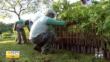 Veja como participar do projeto Viver Cidade - Ação é realizada pela TV Anhanguera em parceria com a Agência Municipal do Meio Ambiente. Haverá plantio de mudas nesse sábado (2).