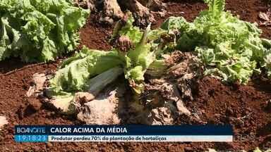 Produtores perdem até 70% das lavouras de hortaliças por causa do calor em Ponta Grossa - No mercado, as verduras já estão mais caras.