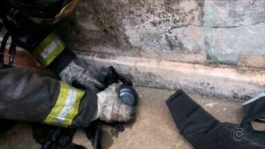 Bombeiros usam máscara de oxigênio para reanimar gato resgatado de incêndio em Marília - Animal que inalou muita fumaça foi achado desacordado durante rescaldo na casa, que não tinha moradores no momento do incidente. Felino foi levado a clínica veterinária e passa bem.