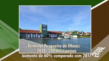 Setor de pescado na Bahia tem crescimento favorável no ano de 2018 - No terminal pesqueiro de Ilhéus foram desembarcadas 240 mil toneladas de peixes.