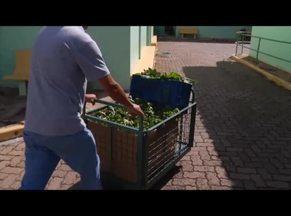 Projeto ajuda instituições de Valadares com doações de hortaliças - Sete instituições são beneficiadas.