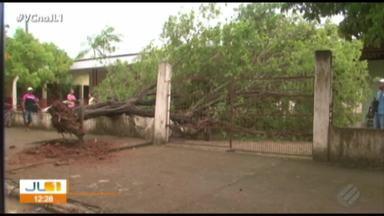 Árvore desaba dentro do campus da UFPA em Altamira - Vegetal atingiu motos, mas ninguém se feriu.