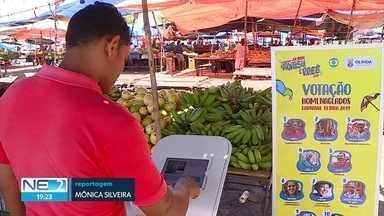 Olinda faz votação para escolher homenageados do carnaval - Urna vai passar por diferentes pontos da cidade.