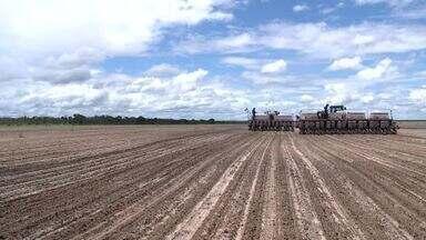 Em Piracuruca, produtores superam safra da soja com 1.500 hectares de plantio - Em Piracuruca, produtores superam safra da soja com 1.500 hectares de plantio