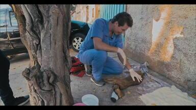 'Vida Animal - Segunda Chance': estreia mostra o trabalho de protetores - Novo quadro do Fantástico vai mostrar o trabalho de profissionais e voluntários que dedicam a vida a cuidar de animais abandonados e encontrar um lar para eles.