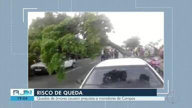 Quedas de árvores causam prejuízos a moradores de Campos, no RJ - Assista a seguir.
