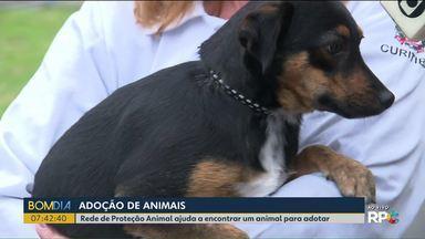 Rede de Proteção Animal ajuda a encontrar um bichinho para adotar - Veja como funciona a adoção de animais.