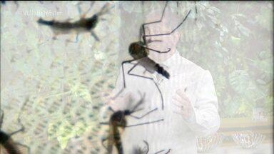 Estado de SP está em alerta para a dengue - Já são mais de 4,5 mil casos confirmados em 2019. Em Araraquara são mais de 1,7 mil casos. Andradina, no noroeste paulista, lidera com mais de 2 mil casos.