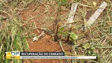 Trator passa por cima de mudas em áreas de recuperação - Pelo menos 50 mudas nativas de Cerrado ficaram destruídas no Centro Olímpico da UnB.