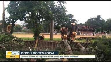 Queda de árvores em Guarulhos - Àrvores caíram na segunda-feira e ainda não foram retiradas