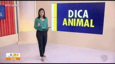 Quadro 'Dica Animal' fala sobre como donos podem acalmar seus pets - Confira as informações com a repórter Clotilde Dantas