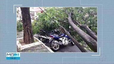 Chuva forte atinge cidades do Vale do Aço e derruba árvores - Trecho da BR-116 ficou interditado por algumas horas.