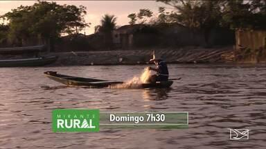 Veja os destaques do 'Mirante Rural' - Programa voltado para as notícias do agronegócio é apresentado todo domingo a partir das 7h30 pela TV Mirante.