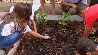 Departamento de Água e Esgototo de Penápolis ensina crianças a fazer compostagem - O Departamento de Água e Esgoto de Penápolis (SP) ensinou as crianças a fazer a 'compostagem' do lixo orgânico das escolas.
