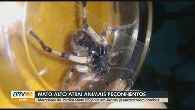 Terreno com mato alto causa transtornos com animais peçonhentos em Araras - Moradores do Jardim Santa Efigênia pedem limpeza do lugar. Prefeitura informou que já notificou proprietários.