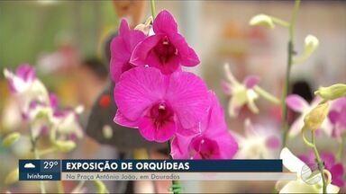 Exposição de orquídeas vai levar mais beleza a praça de Dourados - Cada vez que houver exposição de orquídeas em Dourados, árvores da praça Antônio João vão ganhar exemplares das flores.