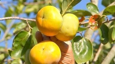 Produtores de caqui estão otimistas com aumento nas vendas no sudoeste paulista - Os produtores de caqui estão otimistas com o aumento nas vendas da fruta no sudoeste paulista.