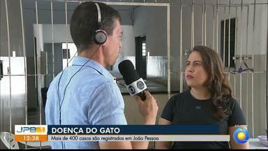 Cidade Verde, em João Pessoa, tem o maior número de casos de esporotricose - Doença pode ser transmitida pelo gato.