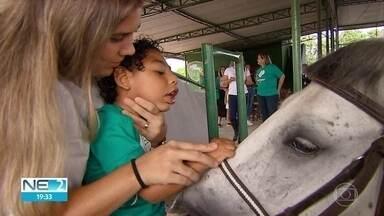 Crianças com microcefalia começam sessões de tratamento com equoterapia - Pesquisadores estão otimistas com o resultado do tratamento em contato com cavalos.