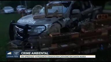 Polícia apreende 14 pássaros em cativeiro em Santa Maria - Os pássaros da fauna silvestre estavam presos em gaiolas. O dono não tinha autorização para criá-los. Ele vai responder por crime ambiental.