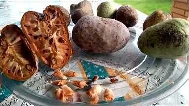Planta conhecida como coração-de-boi pode ser consumida - Planta conhecida como coração-de-boi pode ser consumida.