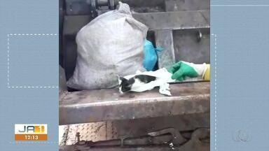 Garis resgatam filhote de gato em saco que foi jogado no caminhão de lixo - Garis resgatam filhote de gato em saco que foi jogado no caminhão de lixo