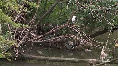 Mudança química da água pode estar causando morte de caranguejos em São Luís - Além da poluição, mudança na água ocasionada pelo excesso de chuvas pode estar contribuindo com as mortes.
