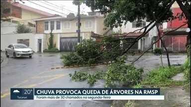 Chuva provoca queda de árvores na capital e na Grande São Paulo - Segundo a prefeitura, quase 90 mil árvores foram podadas e mais de 11 mil removidas em 2018.