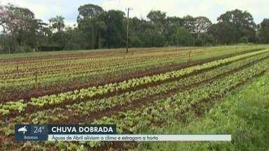 Chuva acumulada em abril prejudica plantações na região de Ribeirão Preto - Em três dias choveu o previsto para o mês.