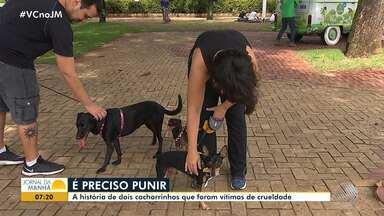 Abril Laranja: campanha alerta para o combate a crueldade contra animais - Conheça a história de dois cachorros que foram vítimas de crueldade.