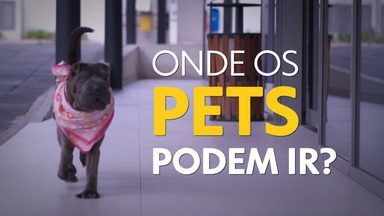 Bem Bicho: onde os pets podem ir? - Espaços pet friendly são cada vez mais comuns!